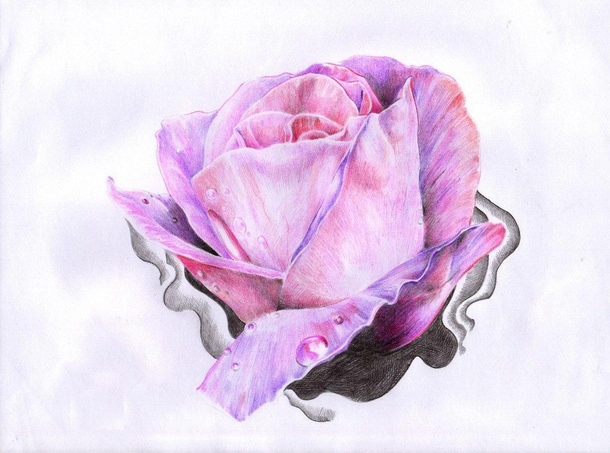Dew Drop on rose drawing tattoo