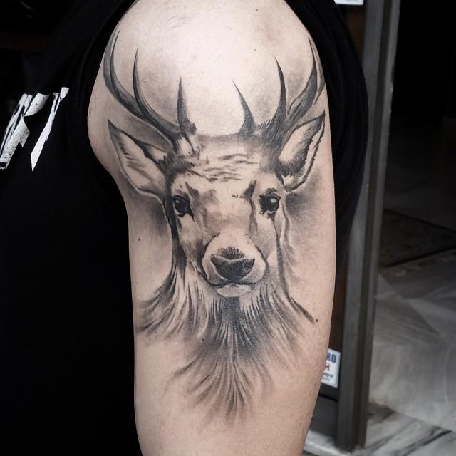 Soft Grey Deer
