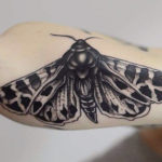 Moth Tattoo Below Elbow