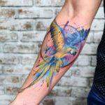 Forearm Tattoo Parrot